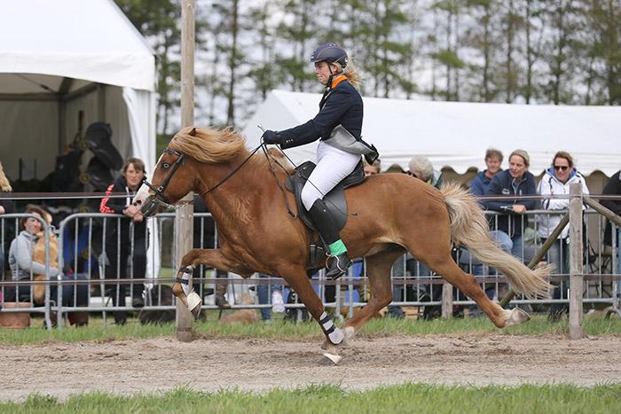 Super spannende Nederlandse Kampioenschappen IJslandse Paarden in Exloo van 14 t/m 16 juli!