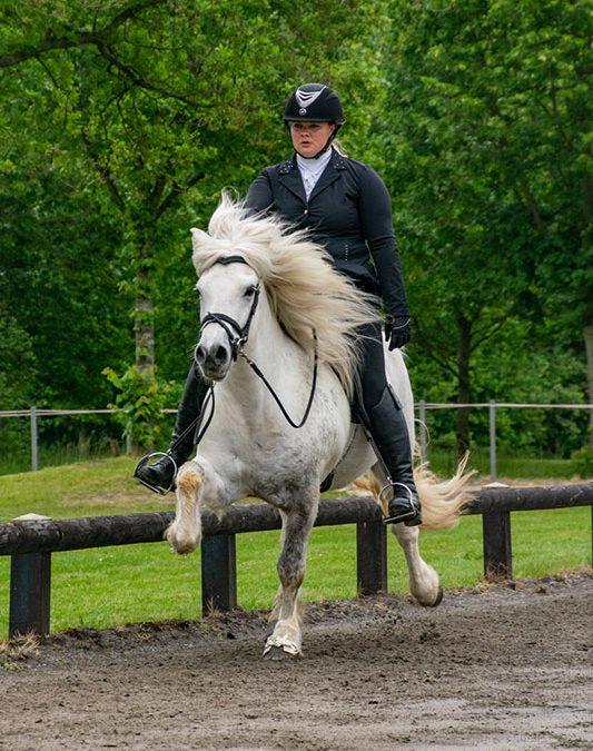 Noord-Nederland vandaag goed voor vier van de zes gouden plakken tijdens het internationale toernooi IJslandse Paarden in Exloo